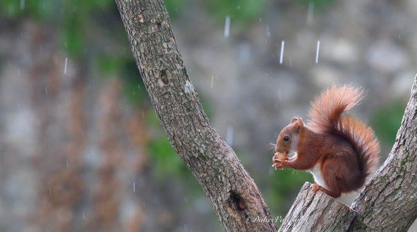 30             Tata insensible à la pluie           60×30